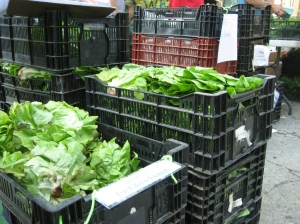 crates-lettuce-distribution14