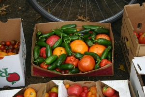 jalapeno-and-heirloom-tomatoes1